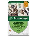 Advantage 40 für Katzen bis 4 Kg
