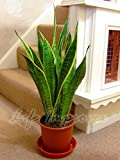 Best Nearly Natural Indoor Plants - Easy Plants 1 MOTHER IN LAW'S TONGUE GOOD Review