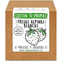Garden Pocket - Kit cultivo FRESAS BLANCAS