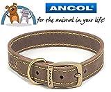 Ancol & bikes4life 46–56cm L Leder, Timberwolf Hundehalsband (British Made)
