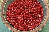 Roter Pfeffer, Rosa Beeren 100g im Aromabeutel Gewürzkontor München