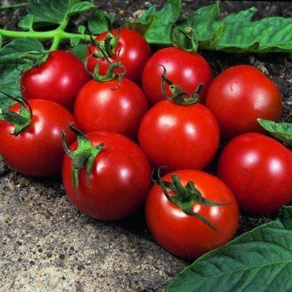 tomate-alicante-10-samen