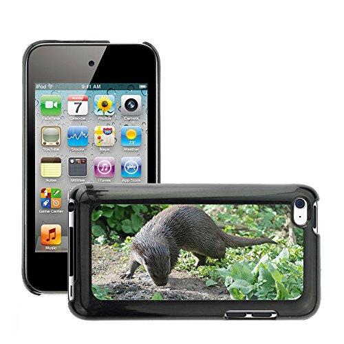 Just Phone Cover Bild Hart Handy Schwarz Schutz Case Cover Schale Etui // M00139914 Otter Wet Tier Säugetier Pelz Wasser // Apple ipod Touch 4 4G 4th (Otter-hülle Für Ipod 4)