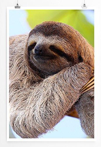 faultier poster Eau Zone Home Bild - Tierbilder – Glückliches Faultier am Baum hängend- Poster Fotodruck in höchster Qualität