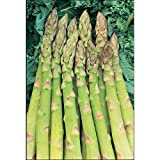 50 Samen Grüner Spargel Asparagus officinalis 'Mary Washington' USA Import