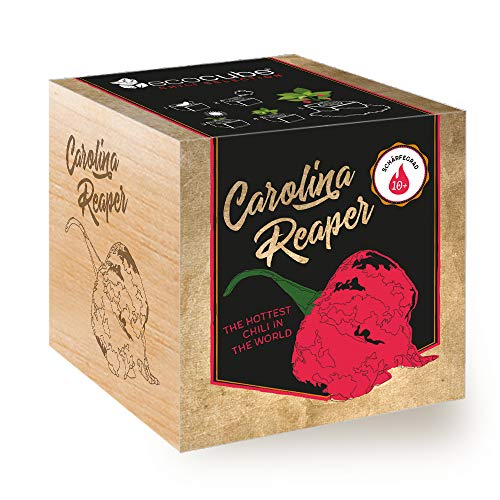 Feel Green Ecocube Chili Carolina Reaper, Schärfegrad: 10+, Scoville: 2.2 Millionen, Nachhaltige Geschenkidee (100{eb5344b748b0102e9d9f28951fff34e1304e90bd64b1056f046a5bd6736e4343} Eco Friendly), Grow Your Own/Anzuchtset, Pflanzen Im Holzwürfel, Made in Austria