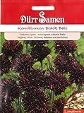 Kornblumen, Black Ball, Centaurea cyanus, ca. 100 Samen