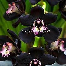 Amazon.fr : Orchidee noire