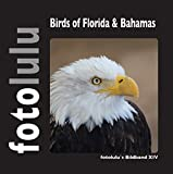 Birds of Florida & Bahamas: fotolulu's Bildband XIV