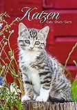 Gr. farbiger Katzenkalender 219719 2019