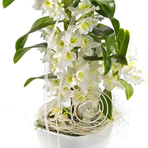 Asiatische Traubenorchidee im Deko-Topf