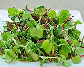 4oz (80000+seeds) : Certified Non-GMO Microgreen Seeds – Sweet Lettuce Mix (4oz (80000+seeds))