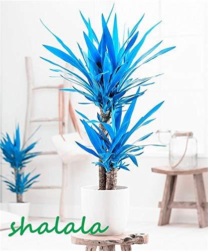 sanhoc 50 pezzi yucca bonsai piante in vaso al coperto vaso bonsai alta germinazione alto-garde bonsai evergreen anti-radiazioni