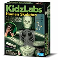 4M Kidz Labs Human Skeleton Play Set