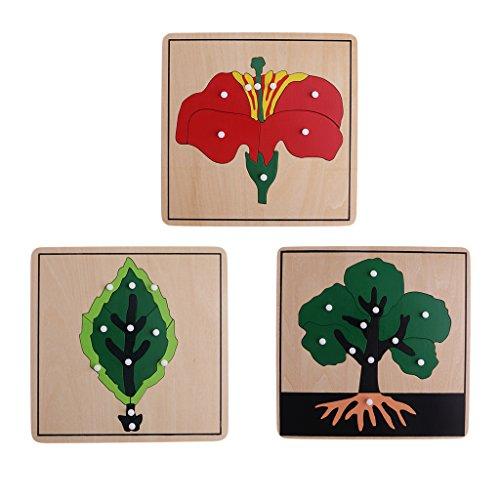 perfeclan Montessori Puzzle Rompecabezas de Madera Material Educativo de Botánica Plantas Naturaleza para Niños