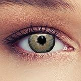 Lenti a contatto colorate grigio naturale per gli occhi scuri senza diottrie + gratis caso di lenti Modello 'Dimension Grey'