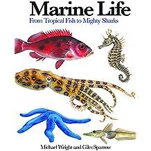 Marine Life: From Tropical Fish to Mighty Sharks (Mini Encylopedia) (Mini Encyclopedia)