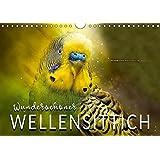 Wunderschöner Wellensittich (Wandkalender 2019 DIN A4 quer): Eindrucksvolle Bilder der beliebten Vögel. (Monatskalender, 14 Seiten ) (CALVENDO Tiere)