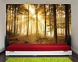 wandmotiv24 Fototapete Wald am Morgen KT391 Größe: 400x280cm Dunst Stimmung Baum