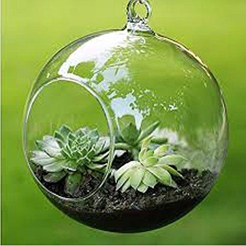 merssavo-pots-a-suspendre-vase-en-verre-transparente-decoration-pour-terrarium