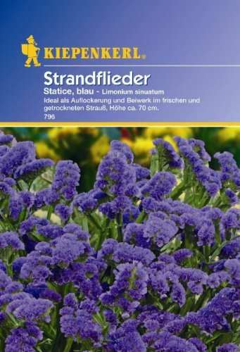 Limonium sinuatum Statice Strandflieder blau