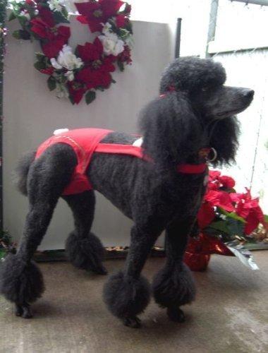 Joybies Weihnachtsshorts für weiblichen Hund XX groß Rot (Hund Sanitär-kleider)