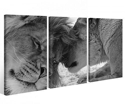 MyDruck-Store Mural 3 pzas. Africa León negro blanco