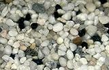 25 kg Farbkies weiss + 10% schwarzer Anteil, Aquarium, Kies