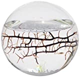 Small Sphere EcoSphere. This fascinating enclosed world contains marine shrimp, algae and micro-organisms. Made from hand blown glass, each EcoSphere is a completely enclosed, self-sustaining little w