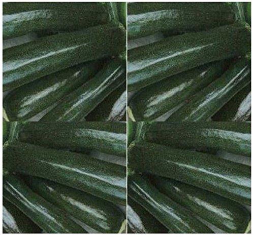 Go Garden PKT Größe: Black Beauty Zucchini Squash Seed - Great Taste ~ ausgezeichneter Geschmack - 55-60 Tage Pkt-taste
