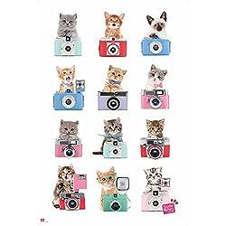 empireposter 738127Gatos–Cámara–Animales Gatos Interactive–Póster, 61x 91,5cm, papel, multicolor, 91,5x 61x 0.14cm