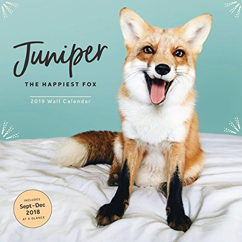 Juniper - the Happiest Fox 2019 Calendar