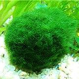 VIDOO Egrow 1000 Pcs Aquarium Fisch Tank Grass Samen Wasser Aquatische Pflanzen Samen Zier Rasen-Behaart