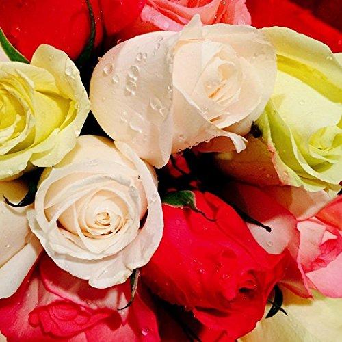 mymotto 100 Pcs Maison Jardin Plante Ornementale Bonsaï Mélange Couleur Rose Graines De Fleurs (# 21)