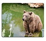 luxlady Gaming Mousepad Bild-ID: 34383794 braun Bär sitzend auf The Rock near Pool Rainy Day