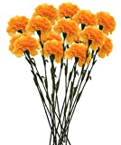 #8: Fourwalls Single Carnation (Set of 15, Yellow)