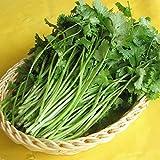 Adolenb Jardin- Racine graines de persil graines de légumes pilules biologiques graines de persil graines de plantes vivaces vivaces