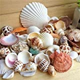 SLB Works 100g Beach Mixed Seashells Mix Sea Shells Shell Craft Seashells Aquarium Decor -