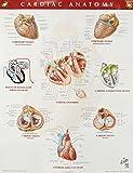 Cardiac Anatomy Chart, 1e (Netter Charts)
