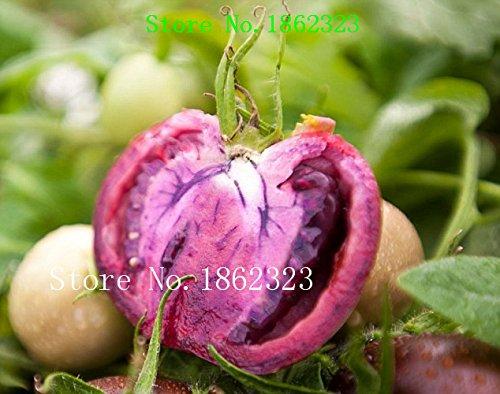 hot-100-pezzo-16-colori-sementi-di-pomodori-new-garden-flowers-four-season-semina-mondo-semi-fiore-r