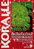 Großpolypige Steinkorallen Im Meerwasseraquarium: Pflege und Vermehrung (Art für Art)