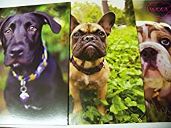Dog Folder 3 Pack Black Lab, Bulldog, Woof Woof