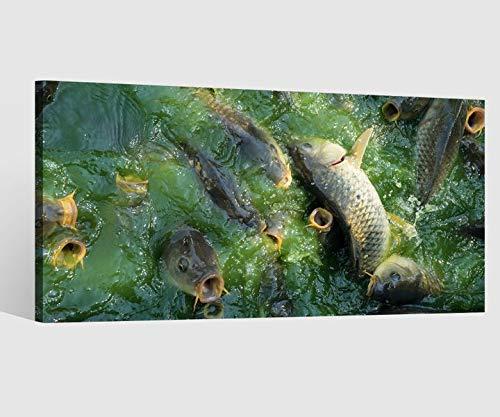 Leinwandbild Fische Tiere Wasser Fisch Angeln Leinwand Bild Bilder Tierwelt Wandbild Holz Leinwandbilder Kunstdruck vom Hersteller 9AB769, Leinwand Größe 1:80x40cm