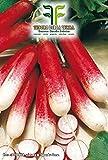 600 C.ca Semi Ravanello Mezzo Lungo Rosso A Punta Bianca 2 - Raphanus sativus In Confezione Originale Prodotto in Italia - Ravanelli lunghi