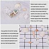 Pandahall Elite ca. 367 g/Karton Shell Perlen natürlichen Seashell Charms für Anhänger DIY Handwerk Machen Home Party Dekoration, natürliche Farbe, gemischten Stil - 3