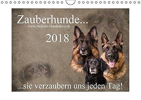 Zauberhunde... sie verzaubern uns jeden Tag! (Wandkalender 2018 DIN A4 quer): Zauberhunde... sie zaubern einem jeden Tag ein Lächeln ins Gesicht und ... [Kalender] [Apr 01, 2017] Hofer-Ott, Nadine