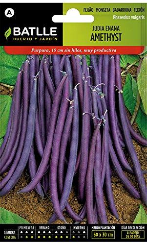 Semillas Leguminosas - Judia Enana Amethyst - Batlle
