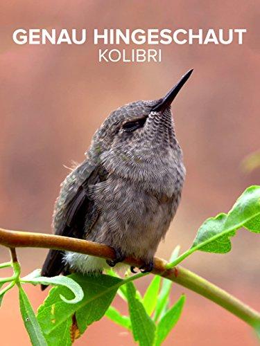 Genau Hingeschaut Kolibri Kolibris Der Welt