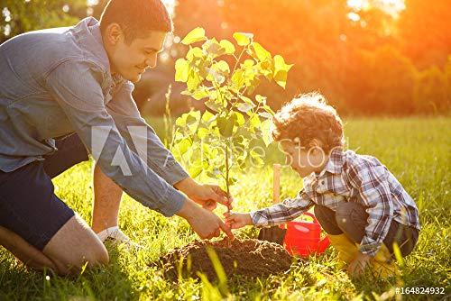 druck-shop24 Wunschmotiv: Boy and Man Planting Seedling #164824932 - Bild als Klebe-Folie - 3:2-60 x 40 cm / 40 x 60 cm