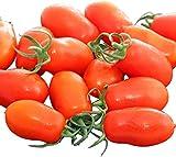 Tomaten San Marzano Nano - 50 Samen